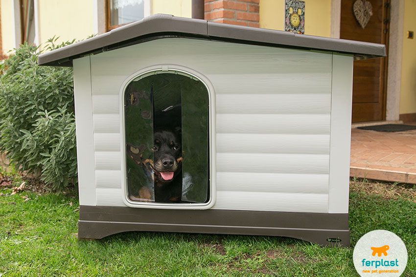 female rottweiler into a plastic dog house