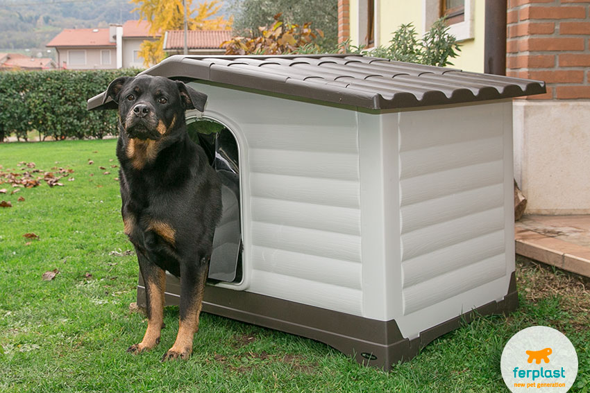 finding the right size of dog house for a rottweiler
