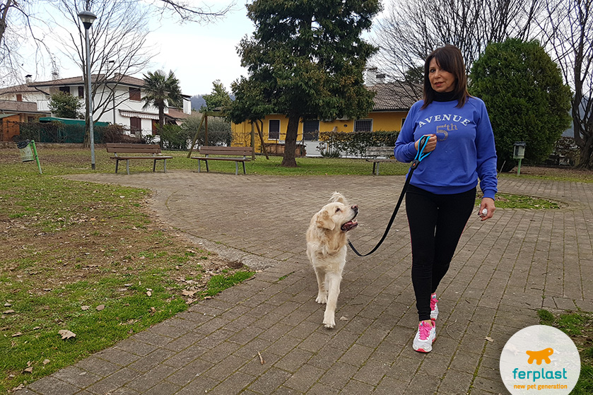 esportes-cão-tais-exercícios-fazer
