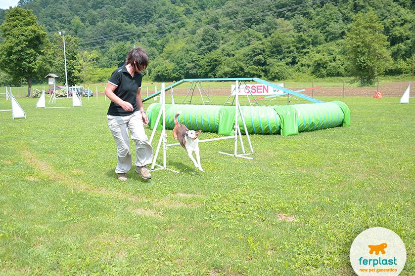 agility_dog_addestratore
