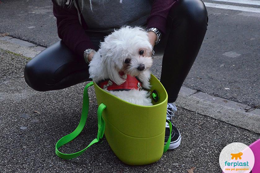 bolsa_transportadora_para_cães_maltês