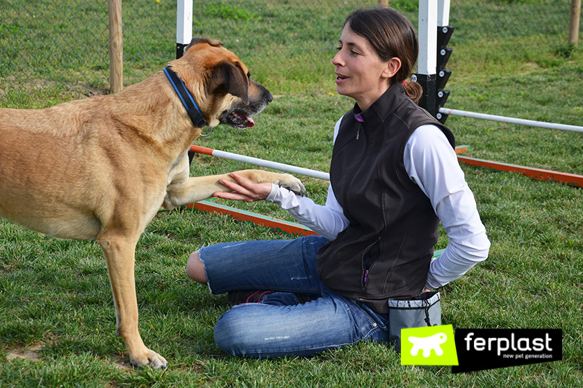 cómo_enseñar_a_su_perro_a_dar_la_pata