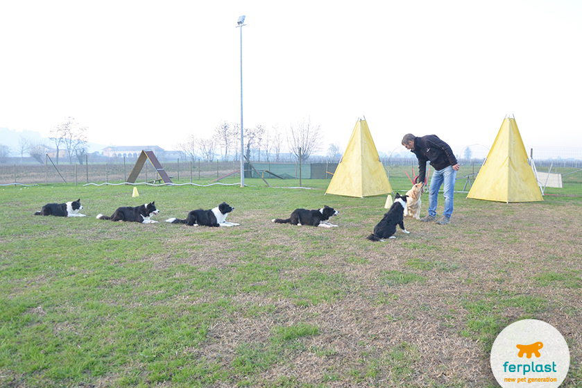como_se_tornar_educador_canino