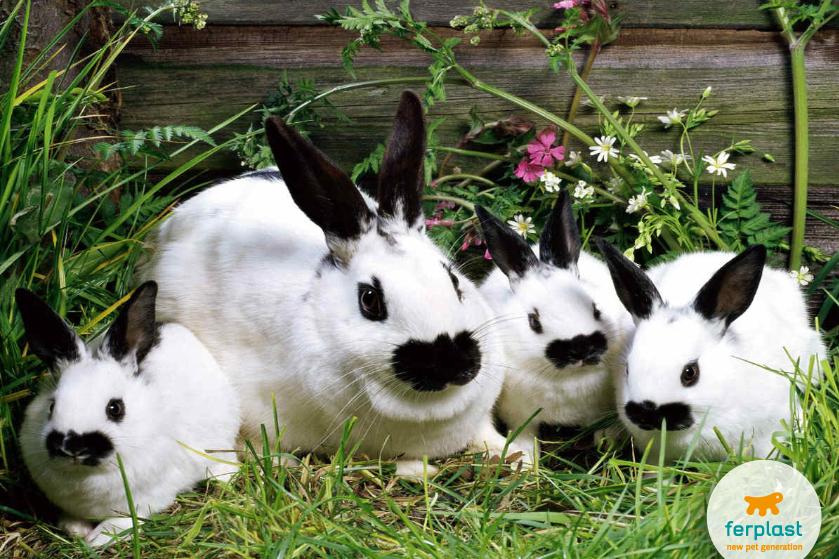 маленькие_кролики_Клетка_для_кроликов_ferplast