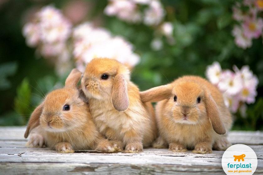 Беременные_Кролика_как_сделать