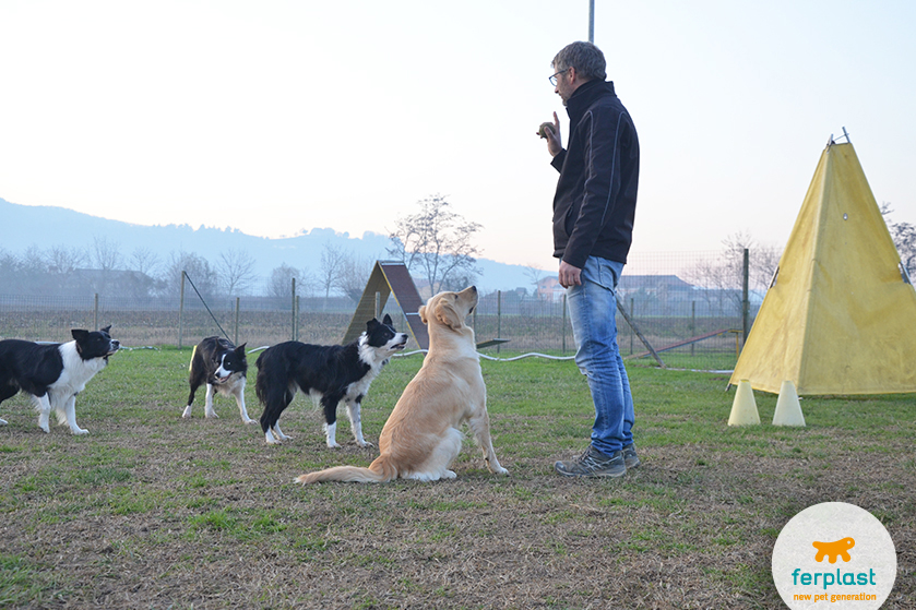 How to become a dog trainer - LOVE FERPLAST