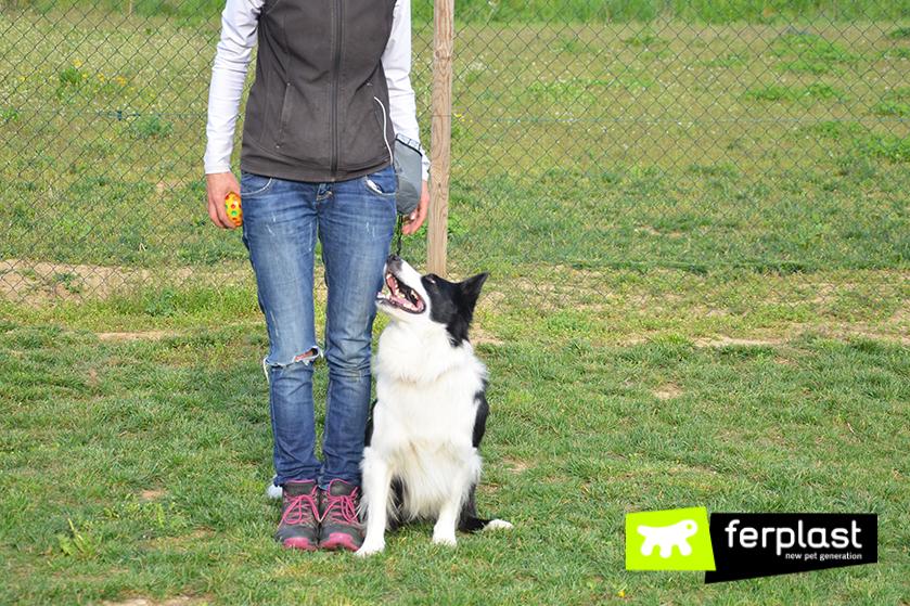 formação_slalom_entre_as_pernas_cão