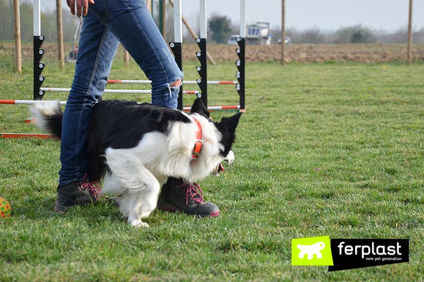 Ejercicios_educativos_para_perros_ejemplo