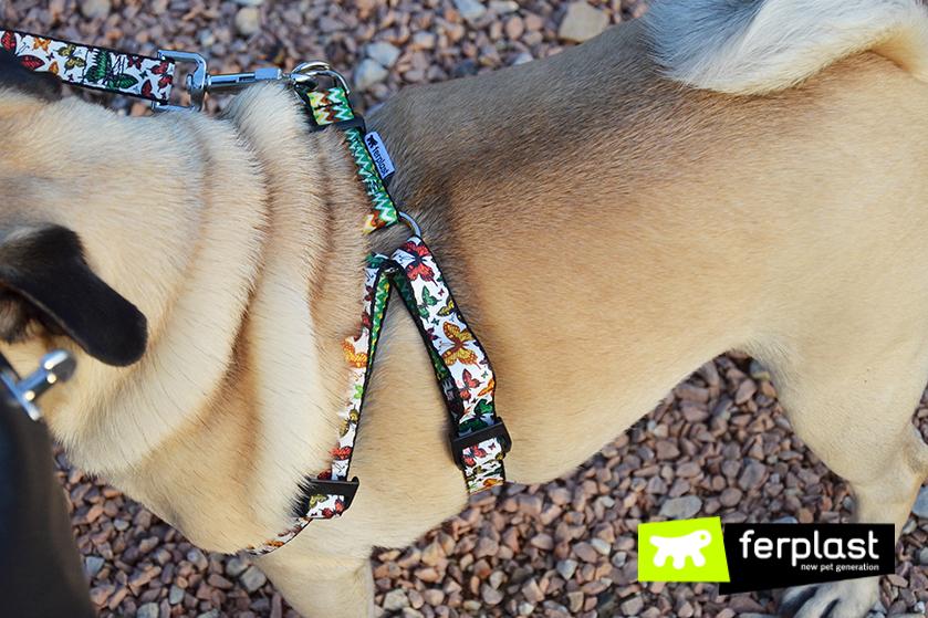 colección_ferplast_fantasia_perro
