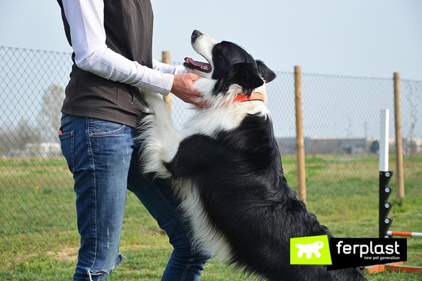 ejercicios_Entrenamiento_de_perros