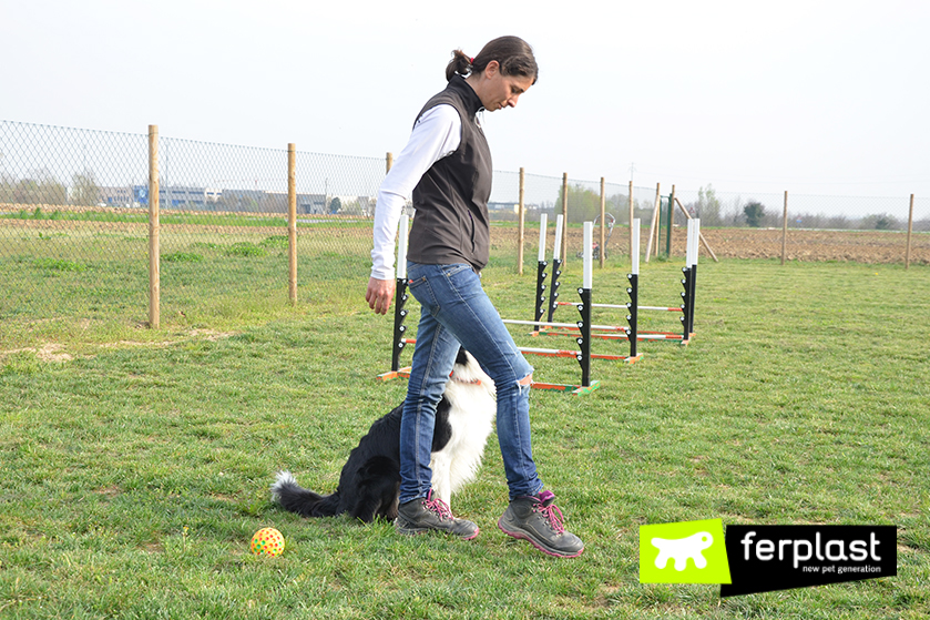 осуществление_для_собак_Слалом_между_ногами_как_сделать