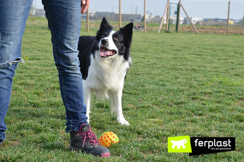играя_с_собакой_мяч