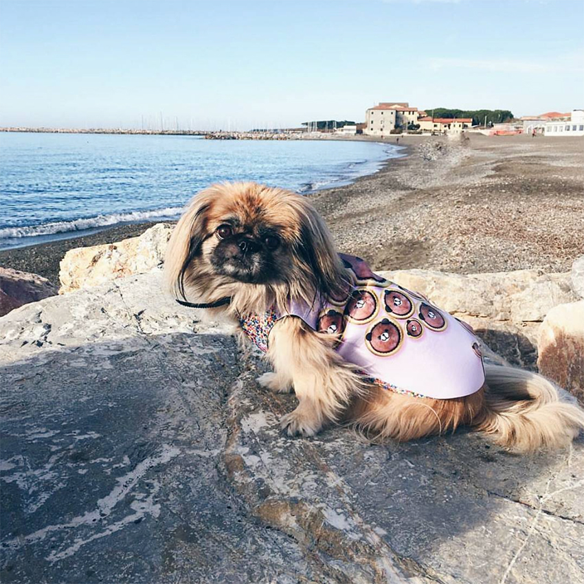 @pashmina_the_peke