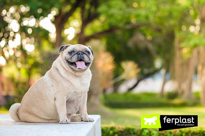 Obesità Nei Cani Anziani Dieta Giochi E Igiene Orale Love Ferplast