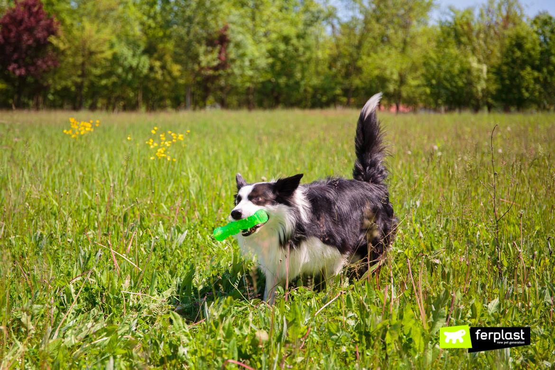 Собака-играет-с-игрой-на-укусы-от-Ferplast