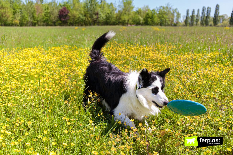 Собака-играет-с-фрисби-от-Ferplast