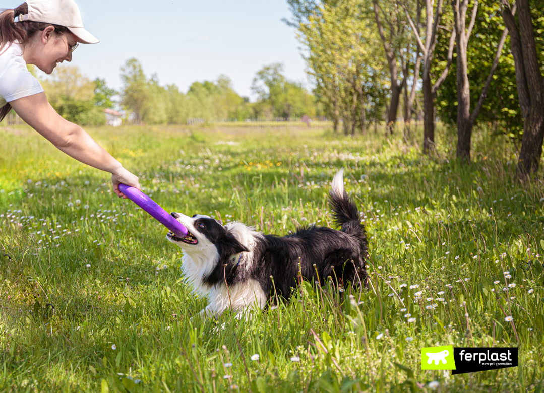 Собака-играет-с-пуллером-от-Ferplast
