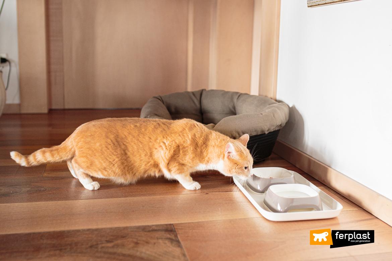 Gatto adulto mangia da ciotole Ferplast
