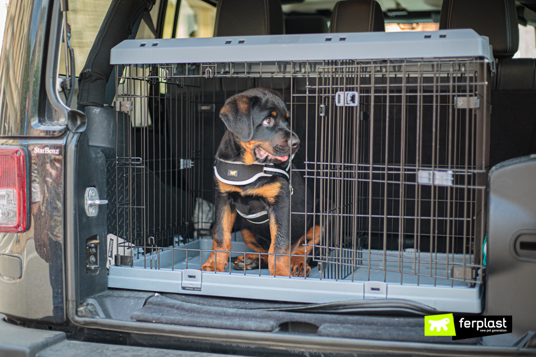 Cane nel kennel Superior di Ferplast in macchina