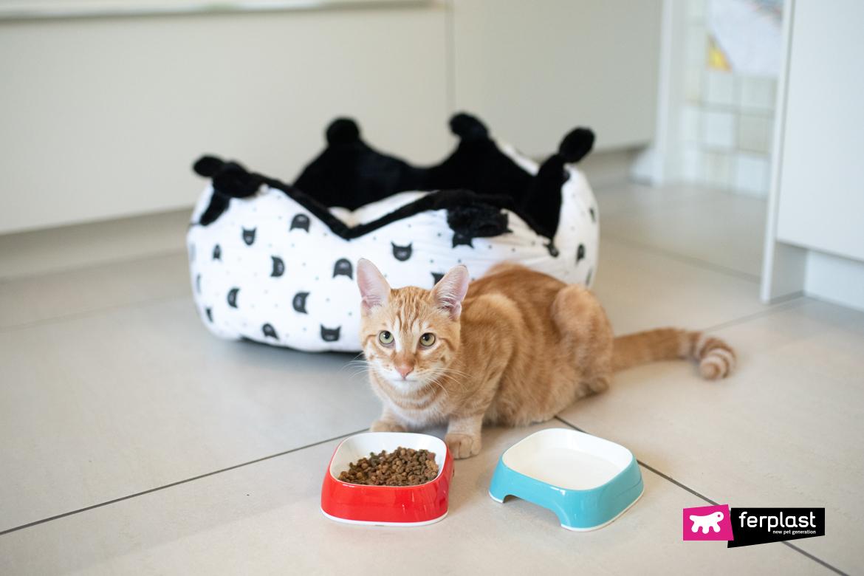 Gattino mangia dalle ciotole Ferplast
