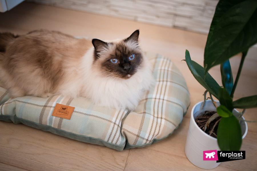 Gatto si riposa su cuscino Scott di Ferplast