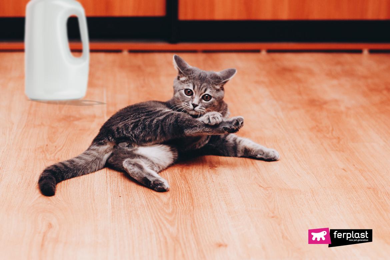 Gatto si struscia per terra