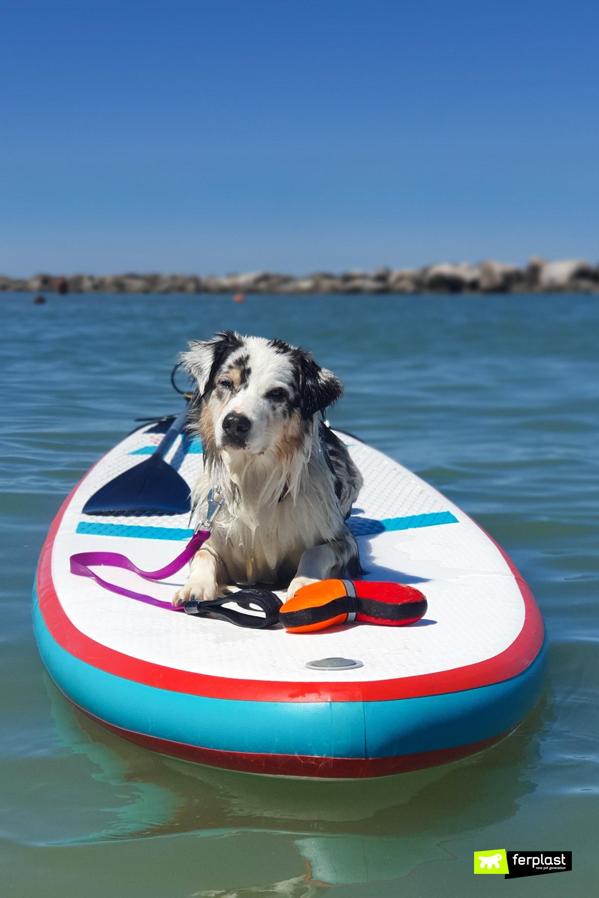Cane al mare con giochi e accessori Ferplast