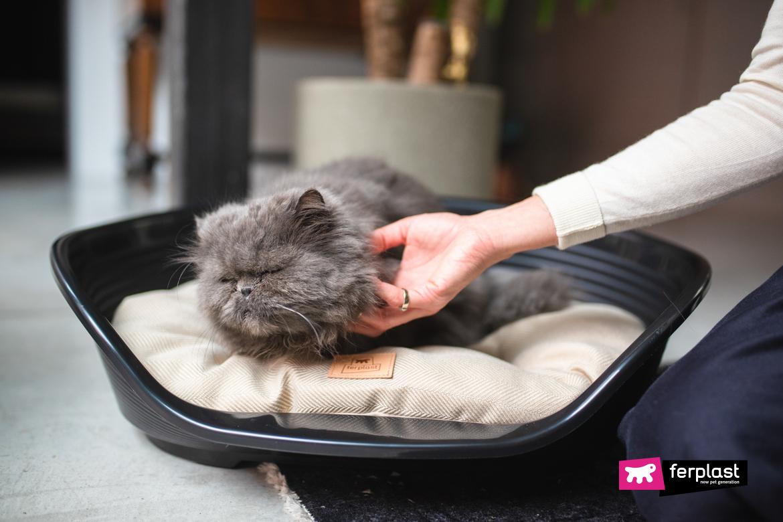 Gatto si riposa su cuscino Ferplast