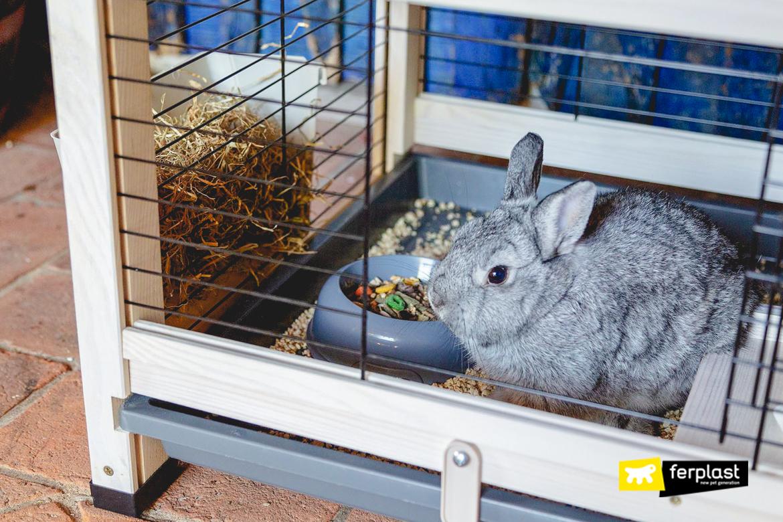 Coniglio nella gabbietta
