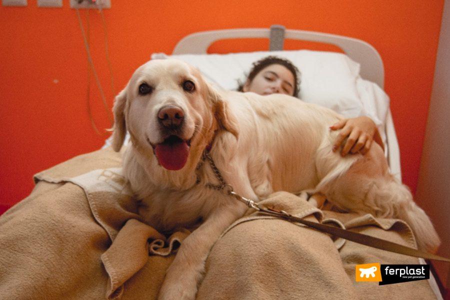 Cane in ospedale per la pet therapy