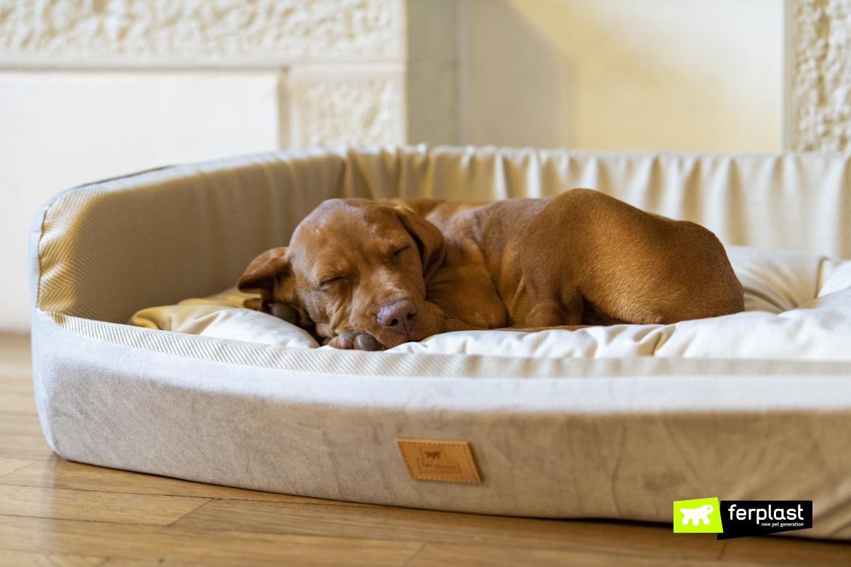 Frida-cachorrinho-Bracco-dorme-no-canil-Harris-da-Ferplast