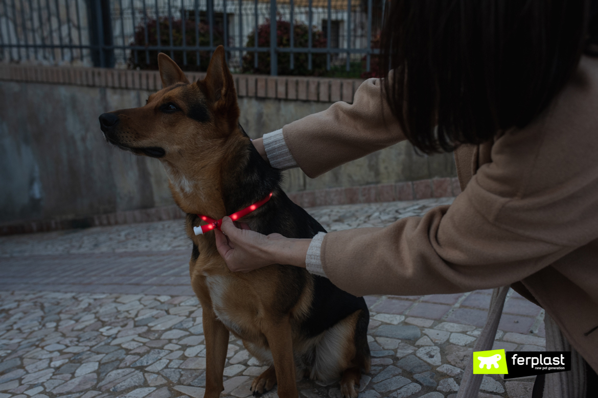 Chien avec collier Night Over Collar Ferplast