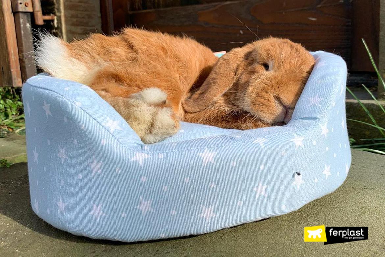 Coniglio riposa su cuccia Ferplast