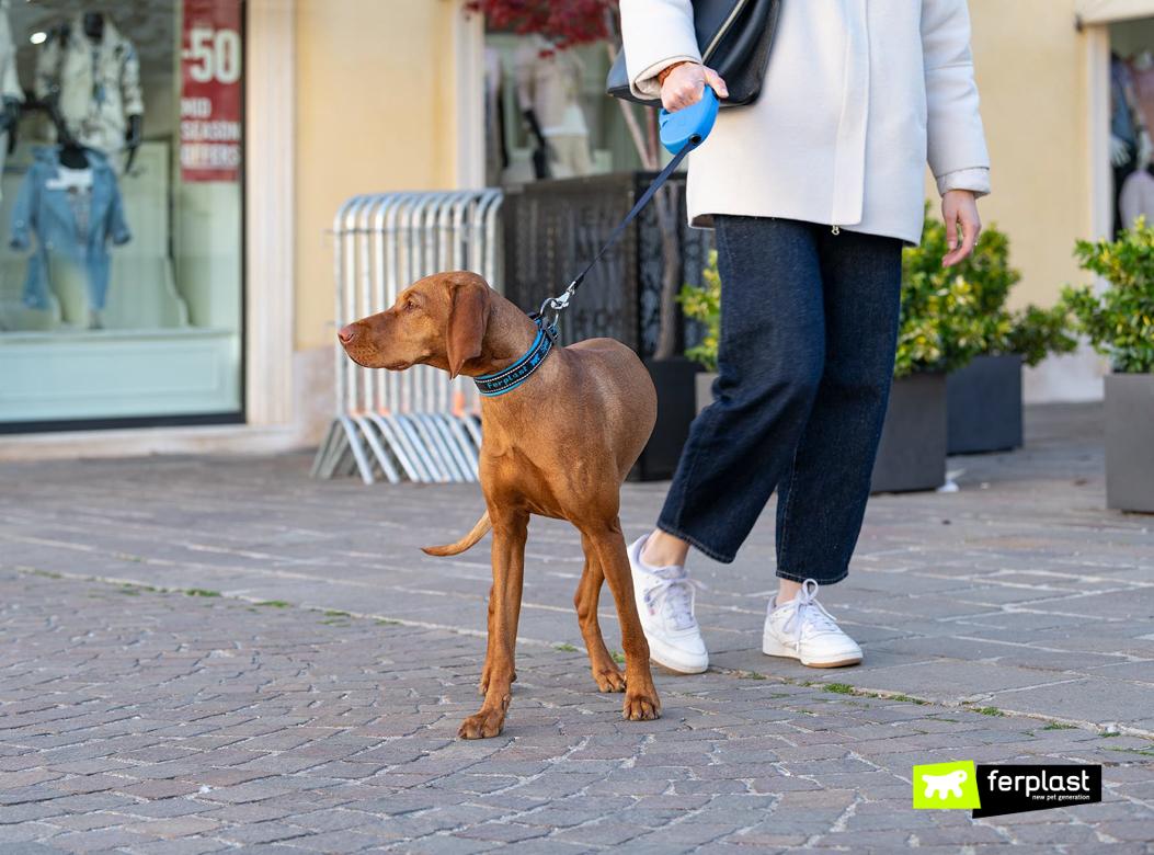 Cane passeggia con padrone e guinzaglio retraibile Flippy One di Ferplast