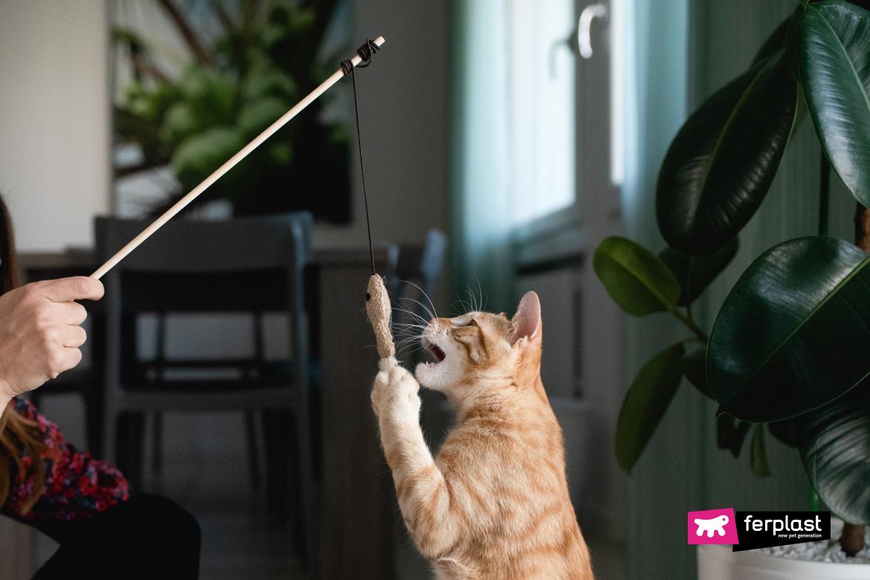 Gatto gioca con accessorio Ferplast
