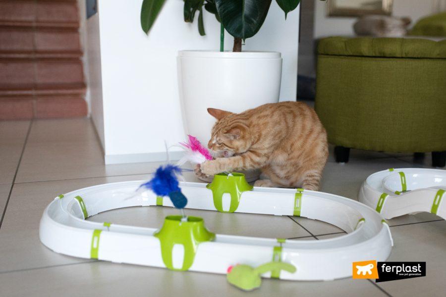 Gatto gioca con gioco Ferplast