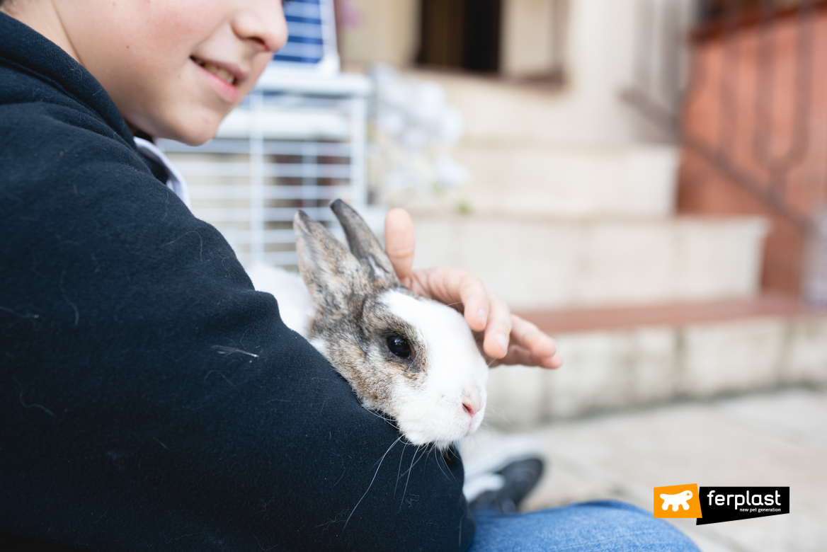 Coniglio in braccio al padrone
