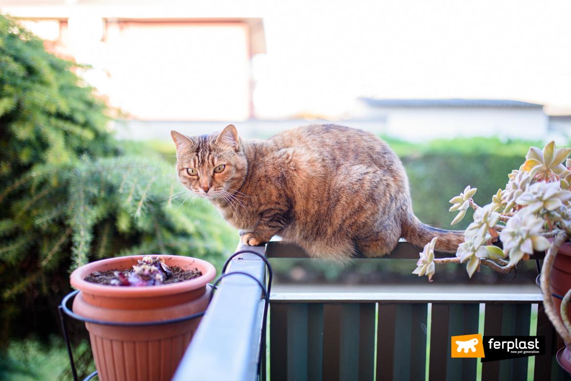 Gatto sul balcone