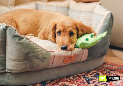 Cane riposa nella cuccetta Ferplast