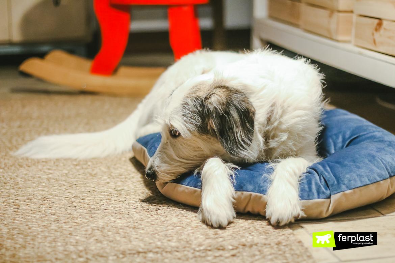 Cane riposa su cuscino Ferplast