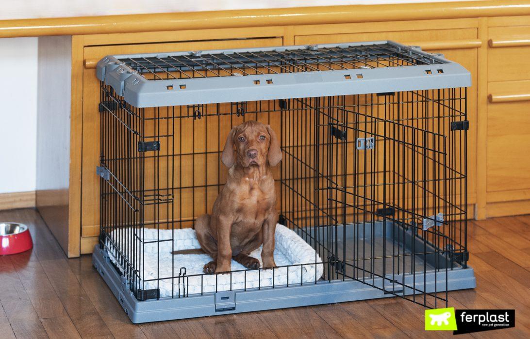 Щенок в ящике для собак Superior от Ferplast