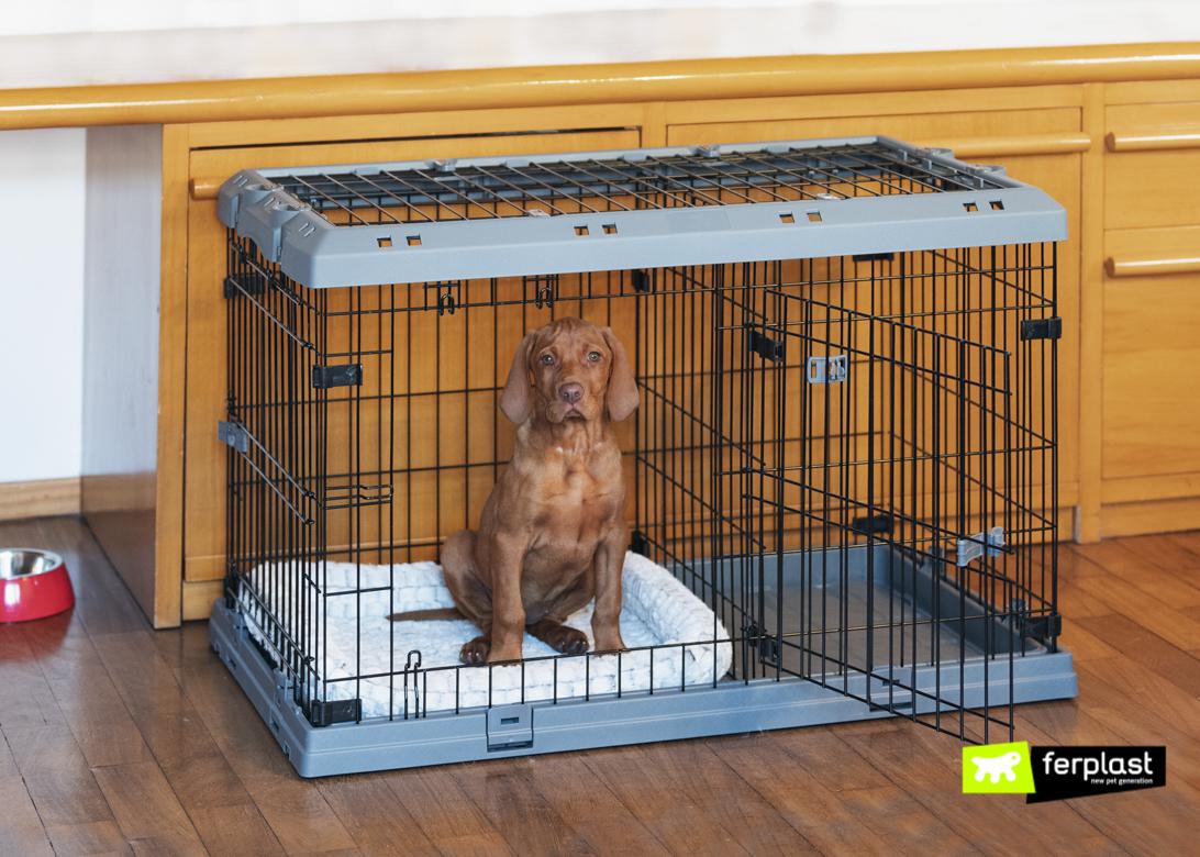 Cachorro na Caixa Superior de Cães da Ferplast