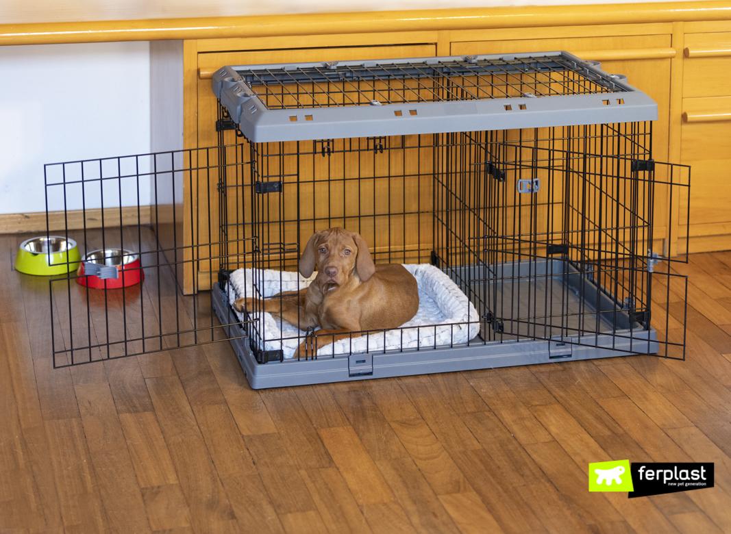 Cachorro-no-Dog-Crate-Superior-por-Ferplast