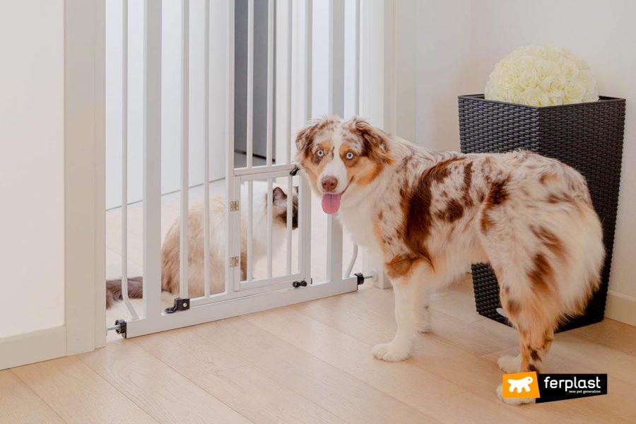 Cane e gatto in appartamento