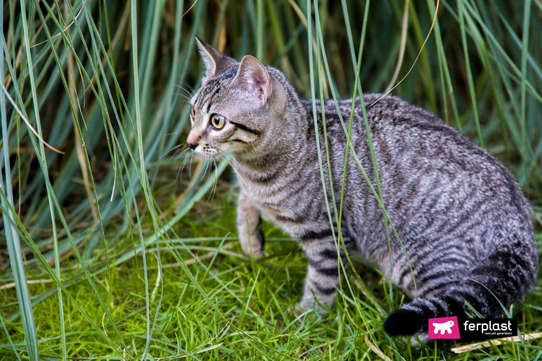 O-gato-caçando-um-lagarto