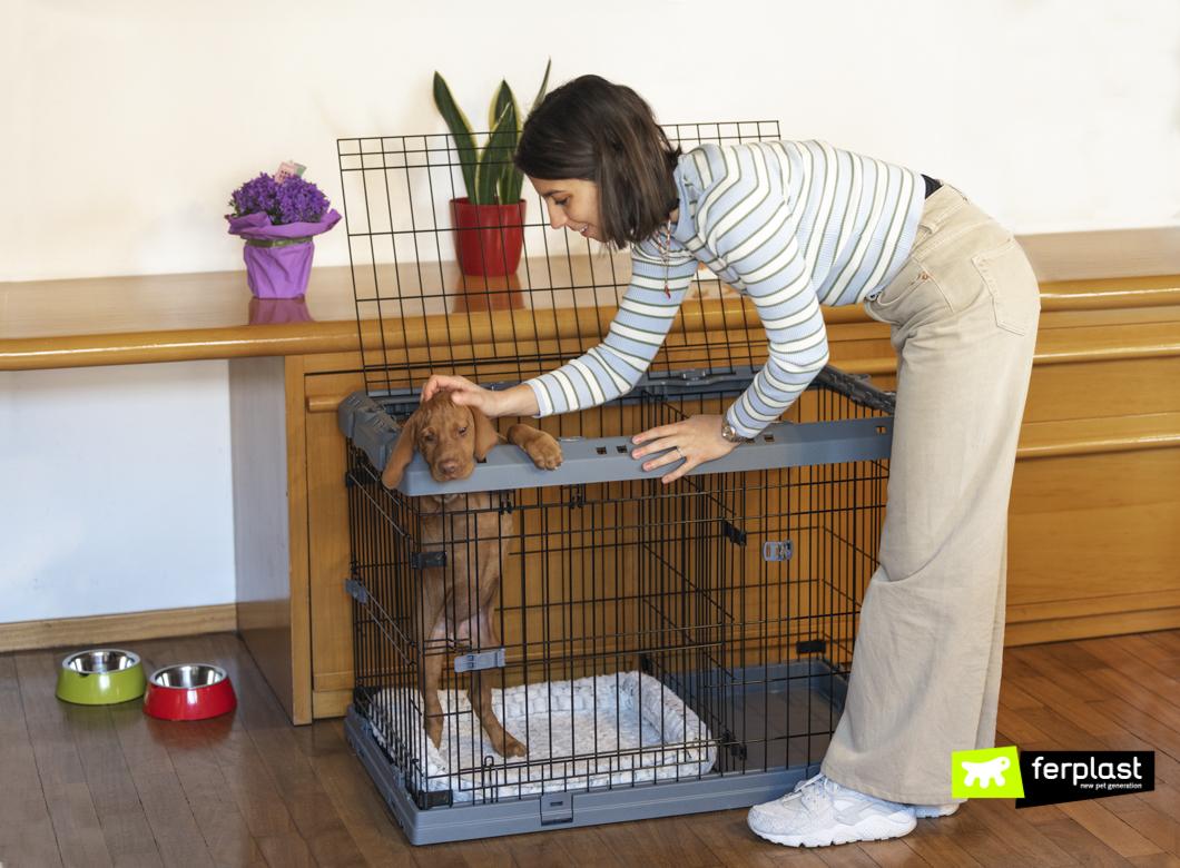 Educação-do-filhote-de-cachorro-no-Dog-Crate-Superior-da-Ferplast
