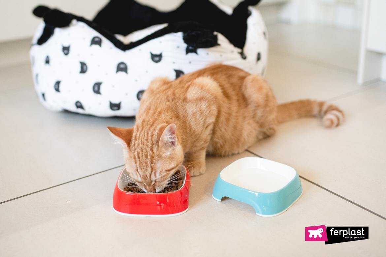 Gatto mangia dalle ciotole Ferplast
