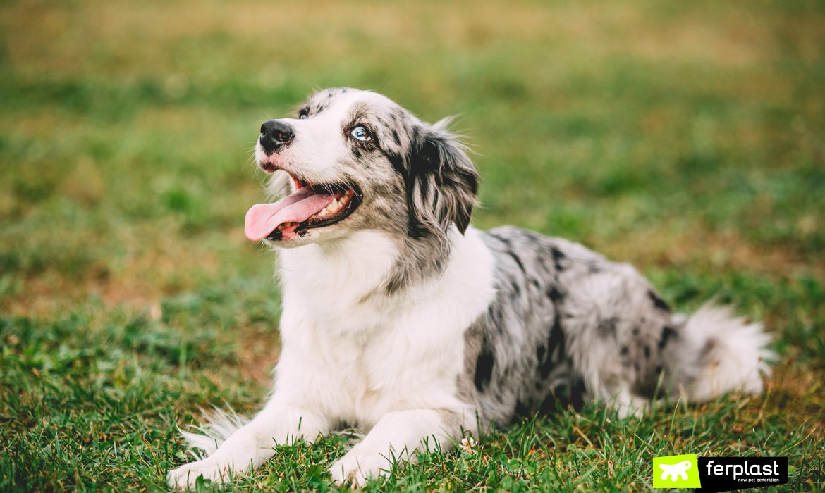 DOGS ROLL ON THE GRASS: HERE'S WHY