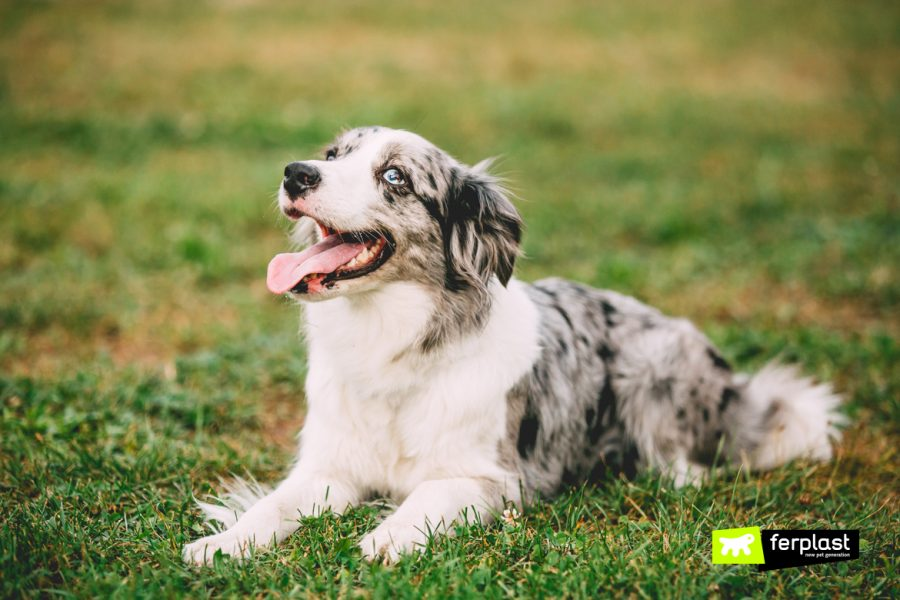 Cane si rotola sull'erba