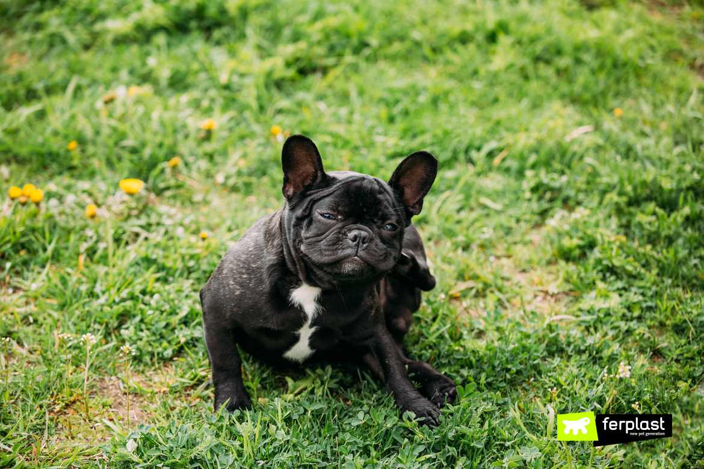 Cane ha prurito e si rotola sull'erba